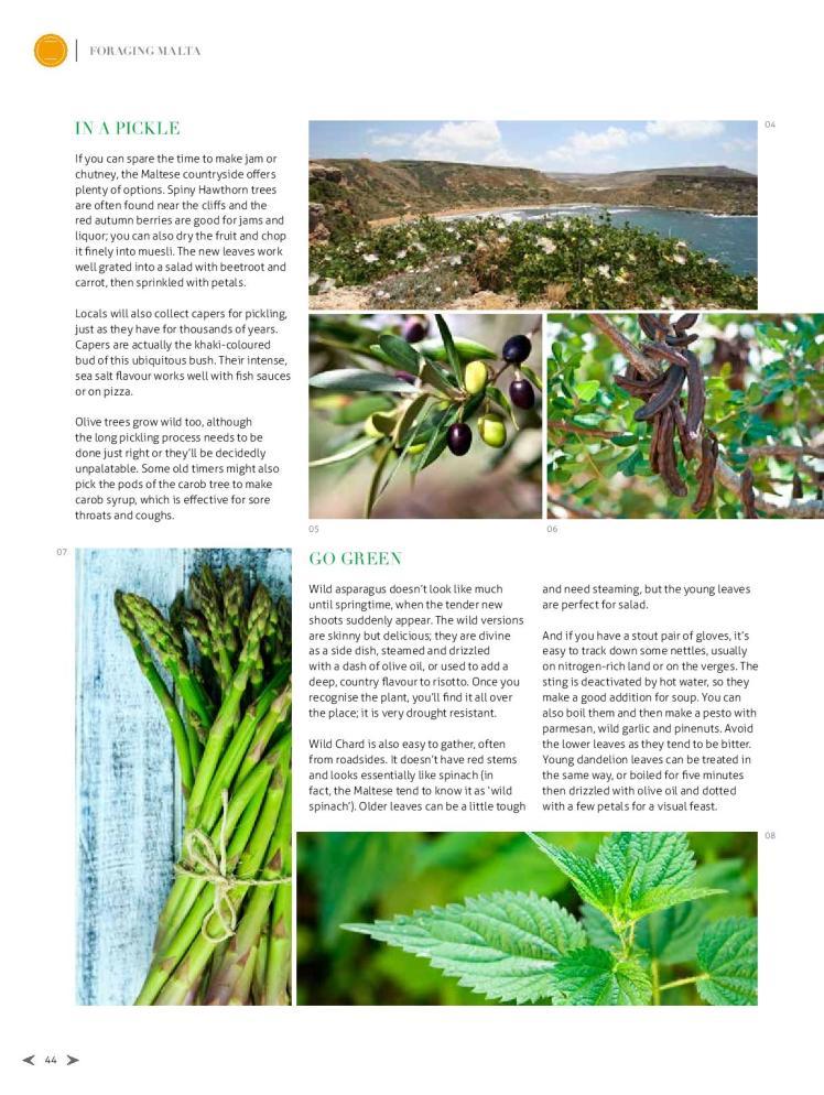 bizilla apr 15 foraging malta p42-page-003
