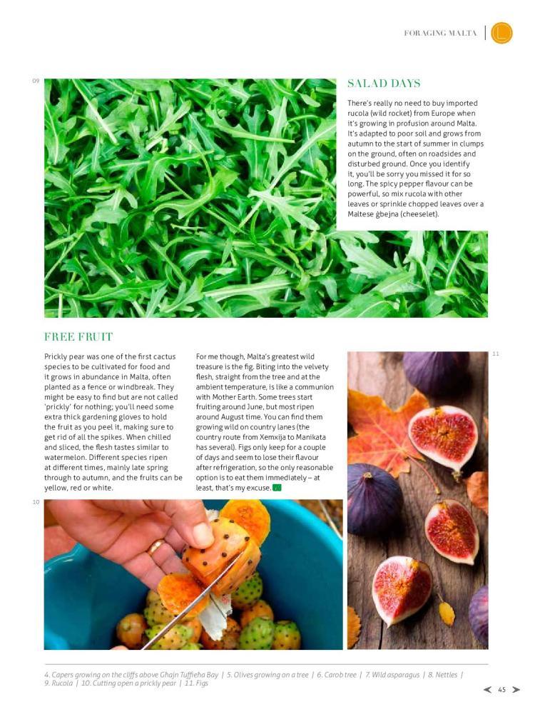 bizilla apr 15 foraging malta p42-page-004