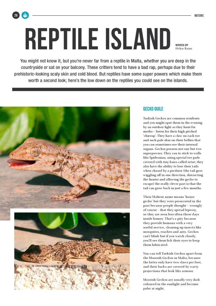 bizilla dec 15 reptile island new-page-001