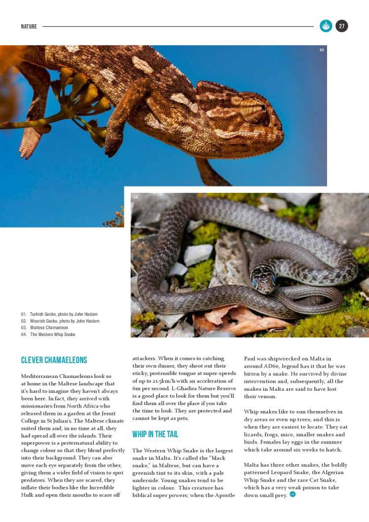bizilla dec 15 reptile island new-page-002