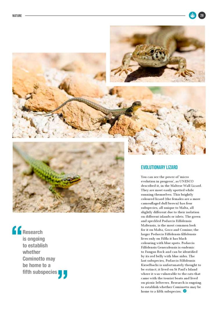 bizilla dec 15 reptile island new-page-004