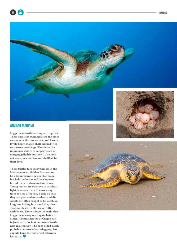 bizilla dec 15 reptile island new-page-005