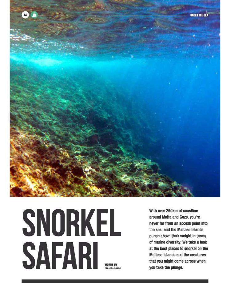bizilla mar 16 - snorkel safari-page-001