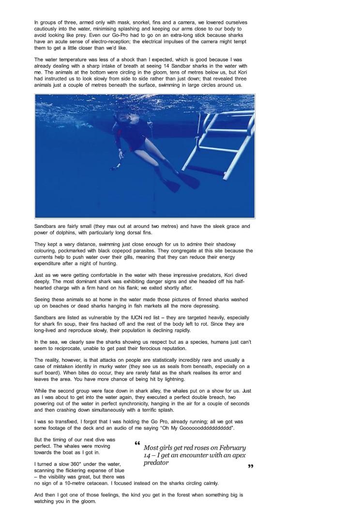 shark diving oahu hawaii 2