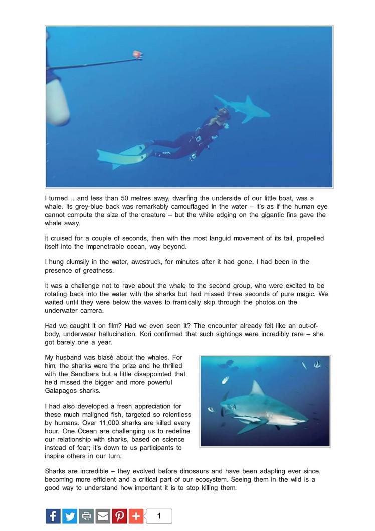 shark diving oahu hawaii 3