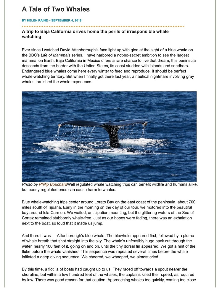 A Tale of Two Whales _ Latest News _ Earth Island Journal _ Earth Island Institute-1 hr